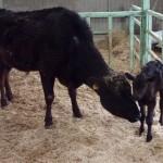 見た目や味ではなく背景で選んでもらえる牛肉