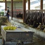 プレミア近江牛販売まであと3ヶ月