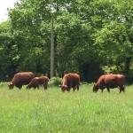 フランスの旅は濃厚で楽しく最高の牛ツアーでした