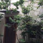 神戸bb9で坂井シェフの薪焼きに魅了された3時間は余韻をひきずりまくるほど幸せなひとときでした