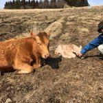 あか牛を訪ねて熊本へ