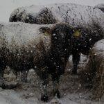 ブラウンスイス牛を食べる会inイルジョット