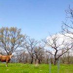 阿蘇の草原プロジェクトinセジール
