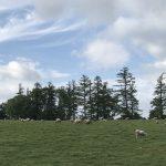 石田めん羊牧場さんのマトンをビストロシンバ菊地シェフが料理すると違う世界が広がった