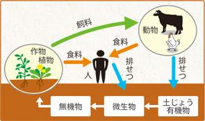 本来の自然界の生態系